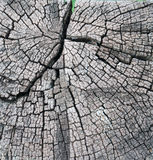 De Close-upgnarl van het boomtimmerhout Stock Afbeeldingen