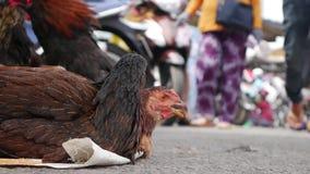 De close-upkippen wachten op verkoop als vers vlees in markt stock footage
