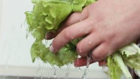 De close-uplengte van slabladeren wordt gewassen in een keukengootsteen stock footage