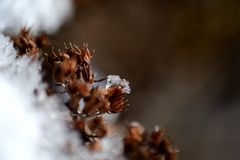De close-upmening die van ijs een deel behandelen van wintered installatie royalty-vrije stock afbeeldingen