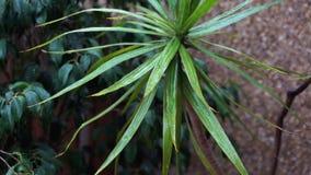 De close-upregen die op groene bladeren vallen, een zachte wind bewoog de bladeren en regendruppelsdaling, stenenachtergrond stock footage