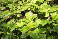 De close-upschot van het aard groen blad royalty-vrije stock afbeeldingen