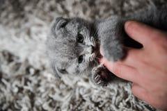 De club van kattenminnaars stock afbeelding