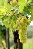 De cluster van druiven stock afbeelding