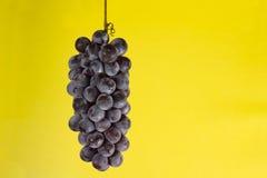 De cluster van druiven Royalty-vrije Stock Afbeeldingen