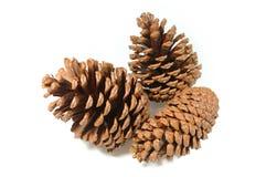De Cluster van Pinecone Royalty-vrije Stock Foto's