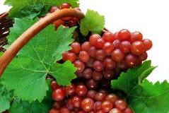 De clusters van de druif Royalty-vrije Stock Afbeeldingen