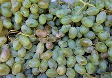 de clusters van de verse gerijpte druiven van groene kleur zijn vitamine-rijk, een ontbijt, regetarianets, stock afbeeldingen