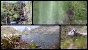 De collage van alpen Hooggebergte, flora, fauna en mensen stock videobeelden