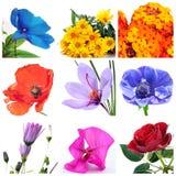 De collage van bloemen Royalty-vrije Stock Afbeelding