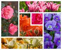 De Collage van bloemen Stock Foto