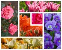De Collage van bloemen stock foto