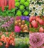 De collage van bloemen Royalty-vrije Stock Afbeeldingen