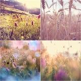 De collage van bloemen Stock Afbeeldingen