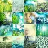 De collage van bloemen Royalty-vrije Stock Foto's