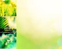 De collage van bloemen Royalty-vrije Stock Foto