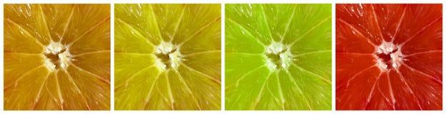 De collage van citrusvruchten Stock Afbeelding
