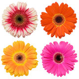 De collage van de bloem op wit Stock Fotografie