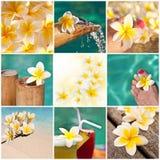 De collage van de Frangipanibloem, tropisch toevluchtconcept royalty-vrije stock afbeelding