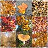 De collage van de herfst Stock Afbeelding