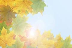 De collage van de herfst. Stock Foto's