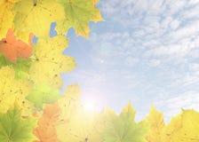 De collage van de herfst. Stock Afbeeldingen