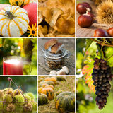 De collage van de herfst Royalty-vrije Stock Foto