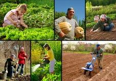 De collage van de landbouw Royalty-vrije Stock Foto's