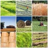 De collage van de landbouw