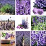 De collage van de lavendel Royalty-vrije Stock Afbeelding