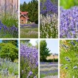 De collage van de lavendel Stock Afbeeldingen