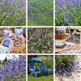 De collage van de lavendel Royalty-vrije Stock Afbeeldingen