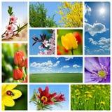 De collage van de lente Stock Fotografie