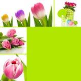 De collage van de lente Royalty-vrije Stock Afbeeldingen