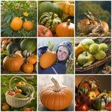 De collage van de pompoen Royalty-vrije Stock Afbeeldingen
