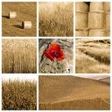 De collage van de tarwe Stock Foto's