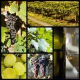 De collage van de wijngaard royalty-vrije stock foto's