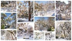 De collage van de winter Stock Foto's