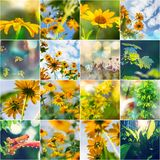 De collage van de zomer Royalty-vrije Stock Foto's