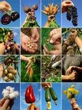 De collage van handen Stock Afbeeldingen
