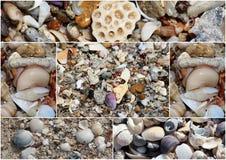 De collage van shells waste omhoog op de zandige kust bij het strand van Hutt dichtbij Bunbury westelijk Australië op een fijne z royalty-vrije stock foto's