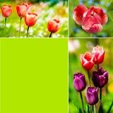 De collage van tulpen stock foto