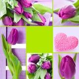 De collage van tulpen royalty-vrije stock foto