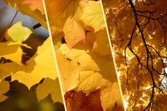 De collageachtergrond van de herfstbladeren Stock Afbeeldingen
