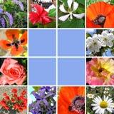 De collagebloemen van de lente Stock Foto's