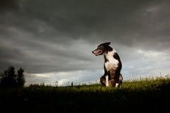 De Collie van de grens met Dramatische Hemel Stock Fotografie