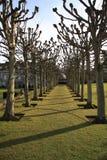 De Colonnade van de boom Royalty-vrije Stock Afbeelding