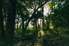 De color verde oscuro Imagen de archivo libre de regalías