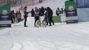 De Competities van het Schiereilandjonge geitjes van Kamchatka Hondslee die Dyulin Beringia rennen stock videobeelden