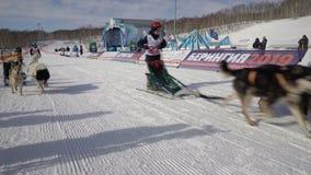 De Competities van het Schiereilandjonge geitjes van Kamchatka Hondslee die Dyulin Beringia rennen stock footage